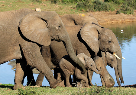 ADDO NP: A quick elephant country visit