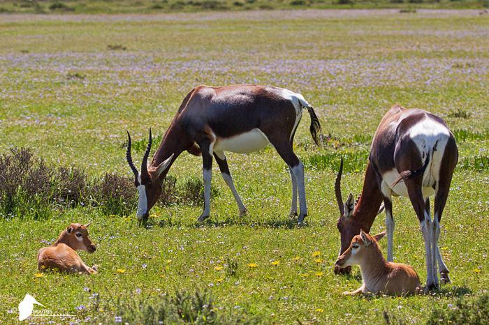 Bontebok National Park 2015: Where is Stanley?