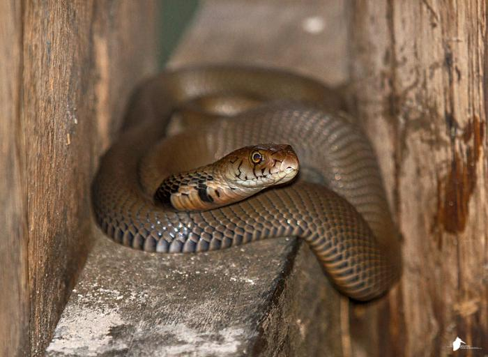 Would you share a bird hide with a snake