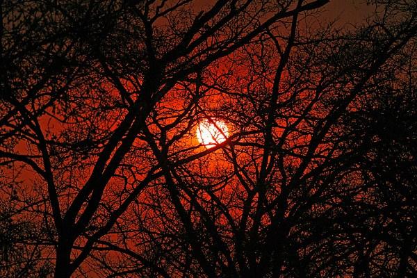 Sun rise in  - Kruger National Park