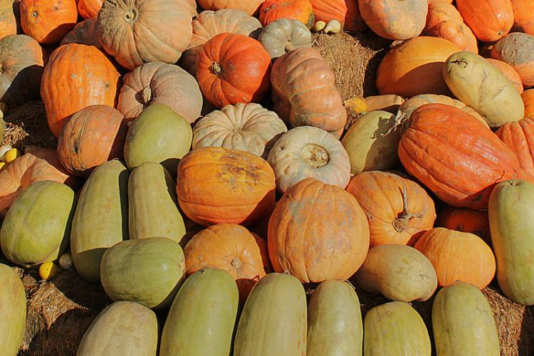 Pumpkins - Worcester