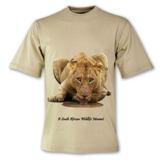 Animals Collection: Thirsty Lioness