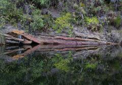 Reflection - Touw River