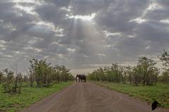 Morning light shining on Elephant